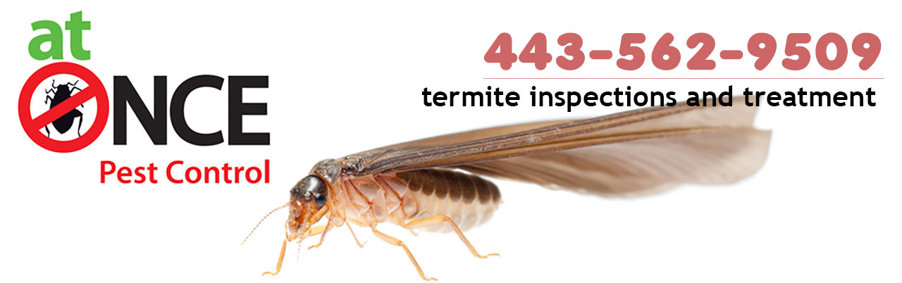 Termite Inspections and Treatment