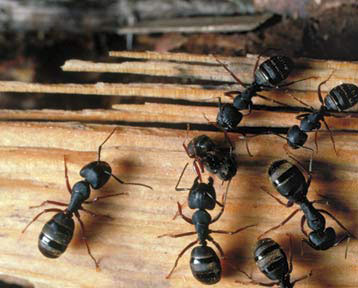 ants exterminator in baltimore maryland
