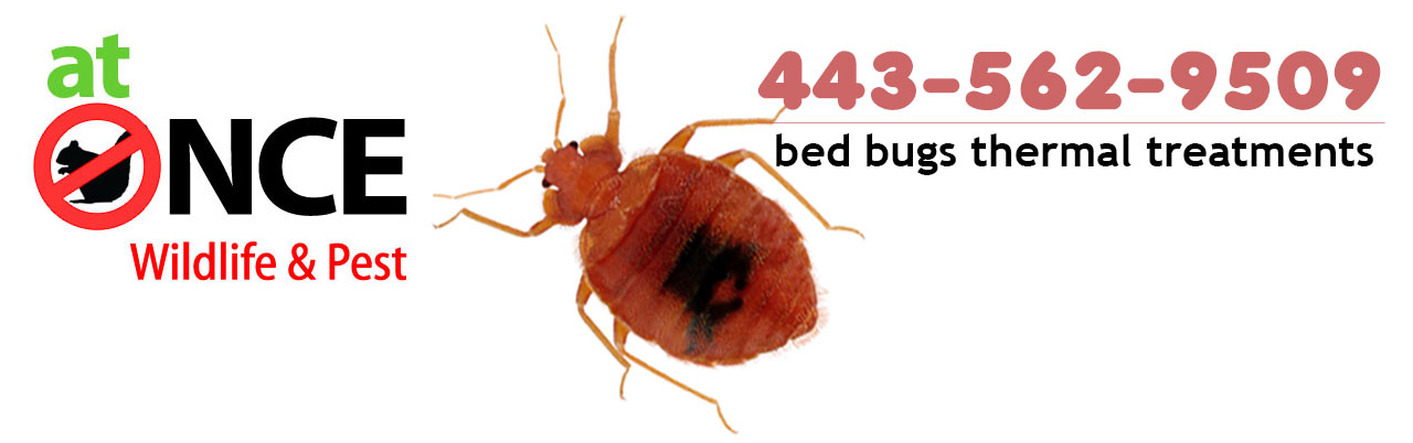 infestation angeles bed plus accuracy bug exterminator bigstock in c los