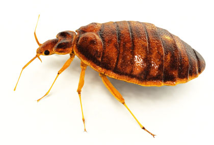 heat and fungi spores treatment for bed bugs in canton maryland