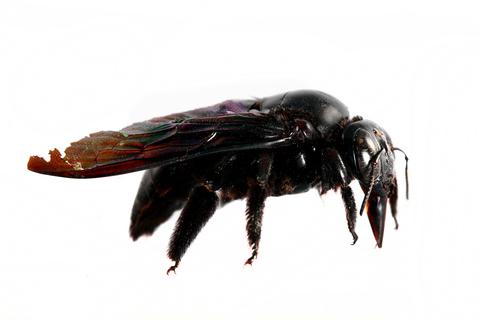 Bee Removal | Baltimore Bees Exterminator | Baltimore Bee Control