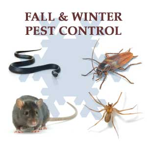 Pest control in Baltimore