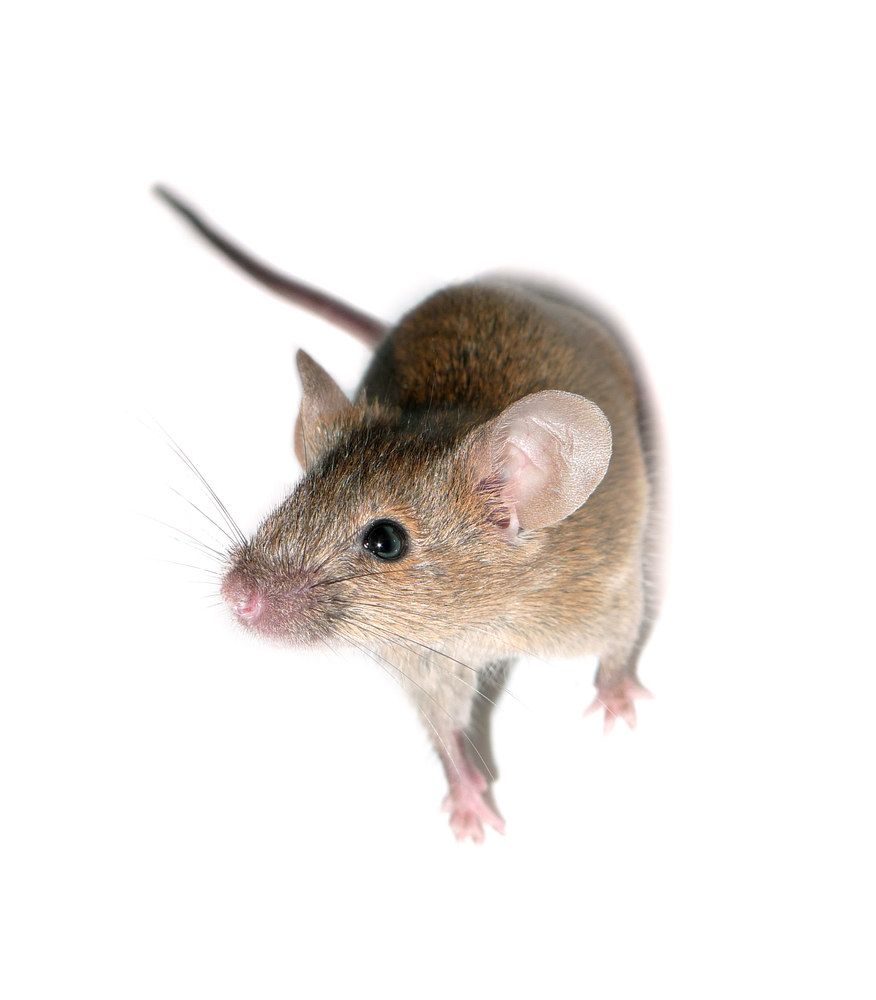 mice exterminator in baltimore maryland