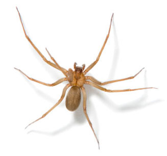 spiders exterminator spiders control in baltimore maryland. Black Bedroom Furniture Sets. Home Design Ideas